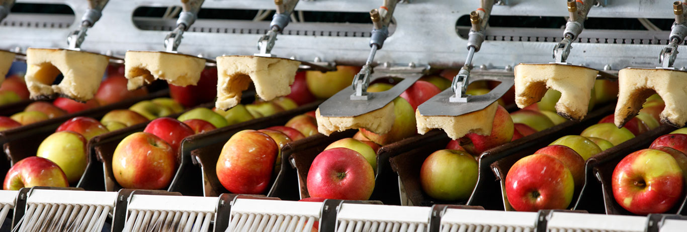 Apples being washed on a conveyer belt. Bundle organic certification with food safety audits for your operation.