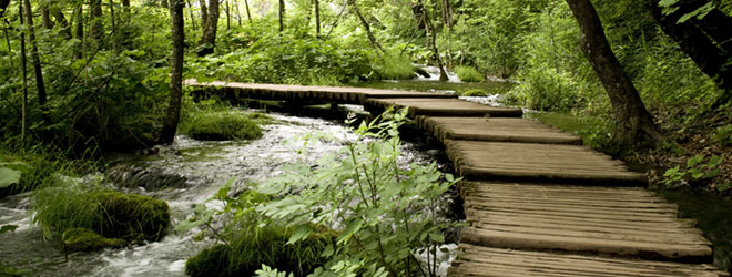 Forest boardwalk; QAI can lead you through the steps of organic certification.