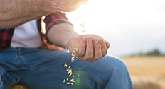 Farmer Pouring Grain