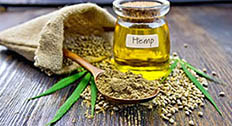 Hemp plant, seeds, and oil